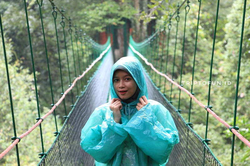 canopy trail ciwalen taman nasional gunung gede pangrango