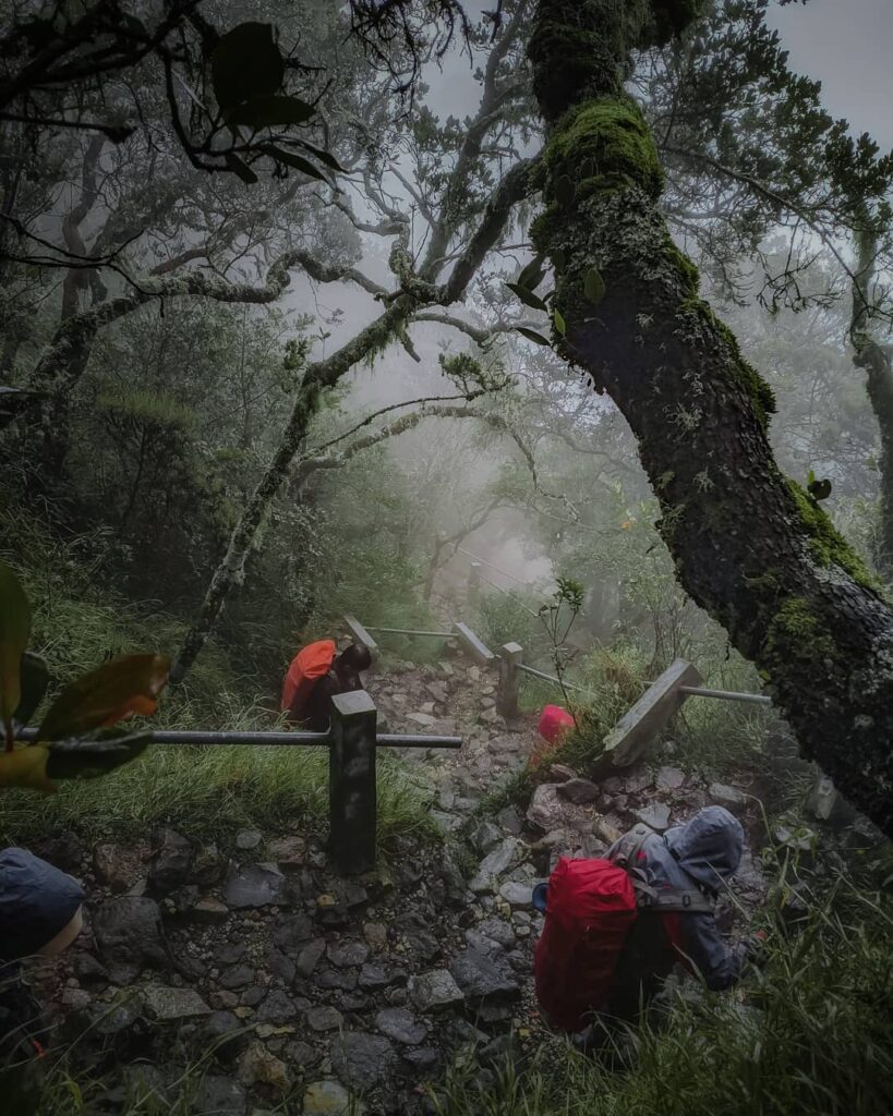 jalur gunung lawu cemoro sewu